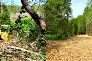 before-and-after-orphan-ground-to-sky-clearing